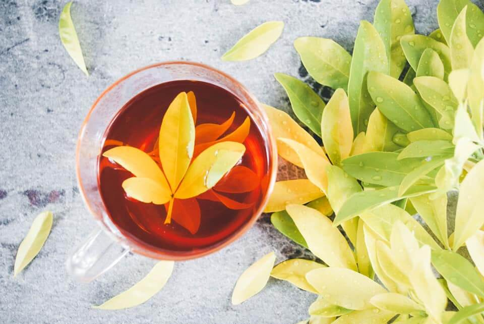 Benefits of rooibos tea.  A tea for anytime of the day, caffeine free and its many health benefits